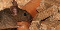 2014_pnas-mice_200